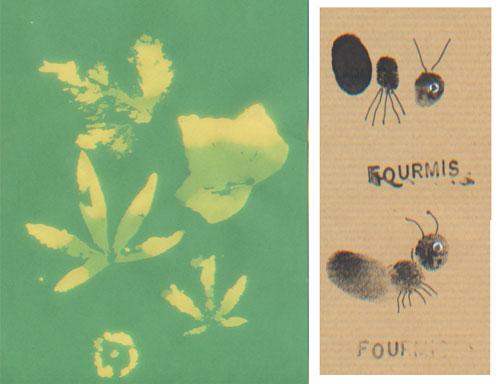 feuilles-javel-fourmis